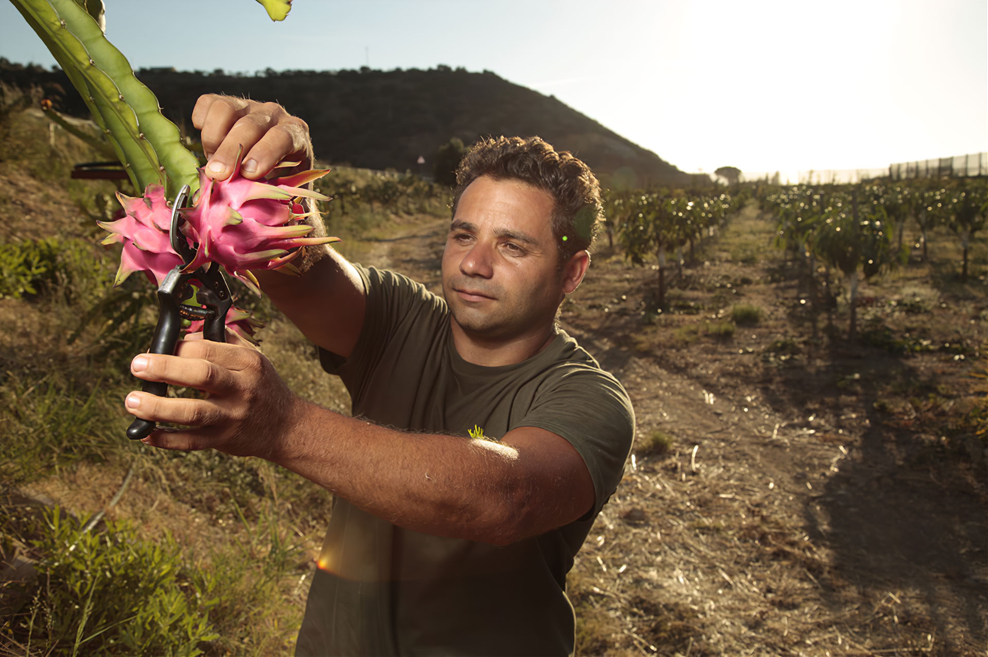 personale in campo impegnato nella raccolta della pitaya rossa